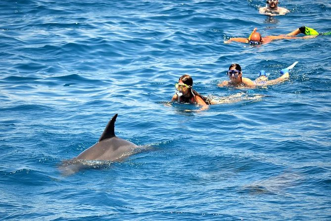 Туристам понравился новый дельфинарий в Хургаде