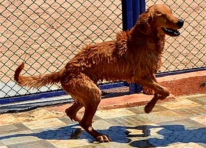 В Хургаде открылся первый отель для домашних животных туристов