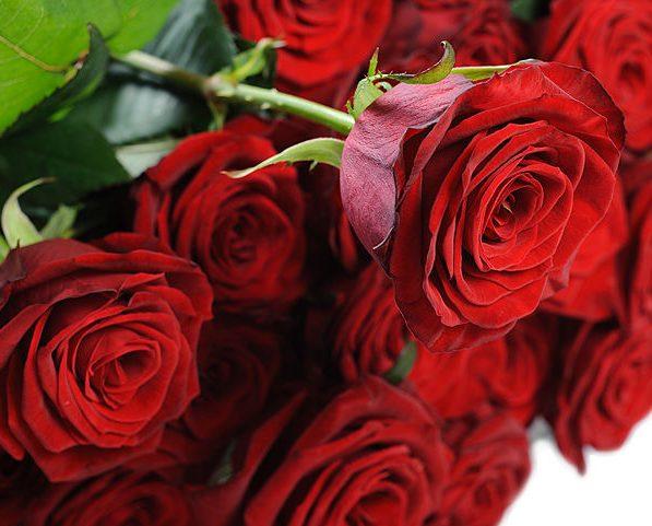 Цветы лучший способ выразить свои чувства
