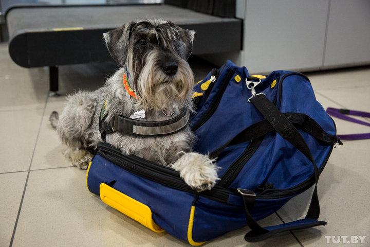 Пассажиры «Белавиа» смогут сами зарегистрировать и сдать багаж в минском аэропорту