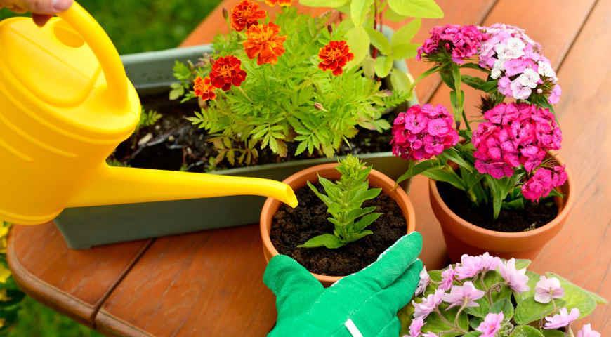 Рассада разнообразных цветов по приемлемой цене