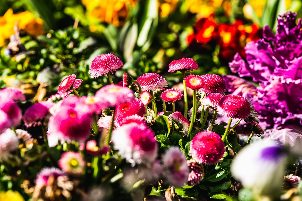 Рассада цветов по доступной цене с доставкой