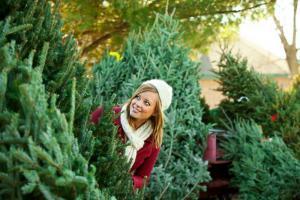 Какую живую елку купить на новый год?