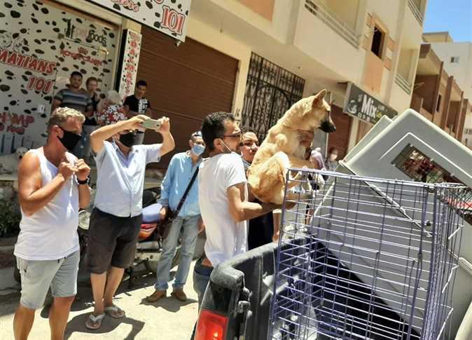 В Хургаде начался отлов и стерилизация бездомных собак