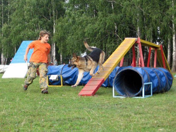 Оборудование для площадок и обучения собак