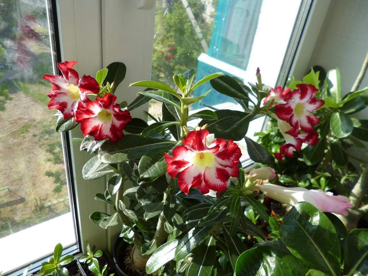 Семена комнатных цветов и растений