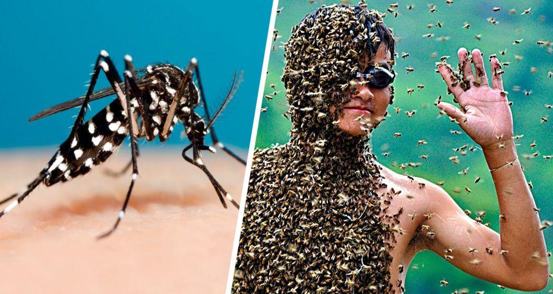 В Турции на людей начали нападать особо опасные комары