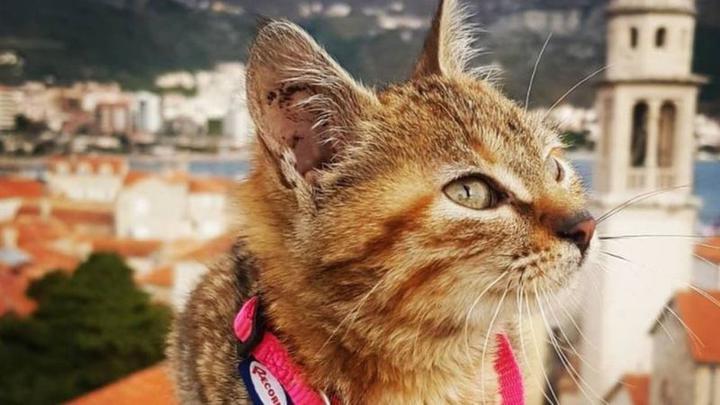 Как боснийская кошка и шотландский сварщик нашли друг друга и покоряют мир