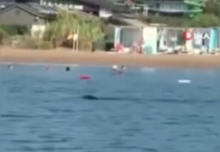 Гигантский тюлень в Анталии плавал с туристами прямо у пляжа отеля. Видео