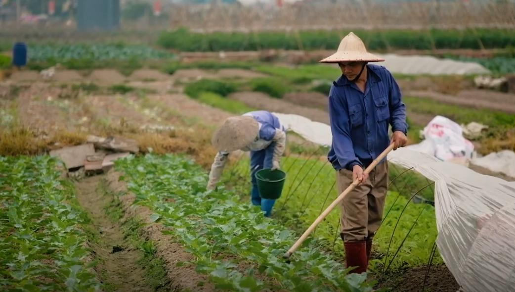 Туроператоры махнули рукой на туризм и подались в фермеры