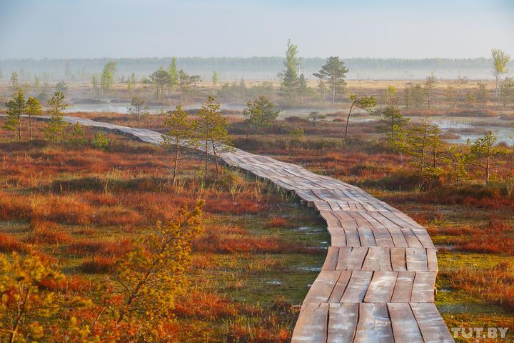 Хорошая новость для туристов: экотропа на болоте Ельня станет длиннее более чем на километр