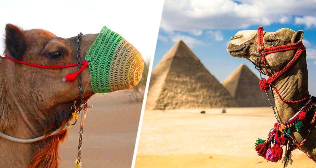 Турфирмы Египта распродают активы
