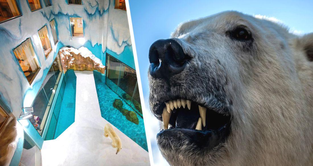 В отель к туристам подселили живых белых медведей