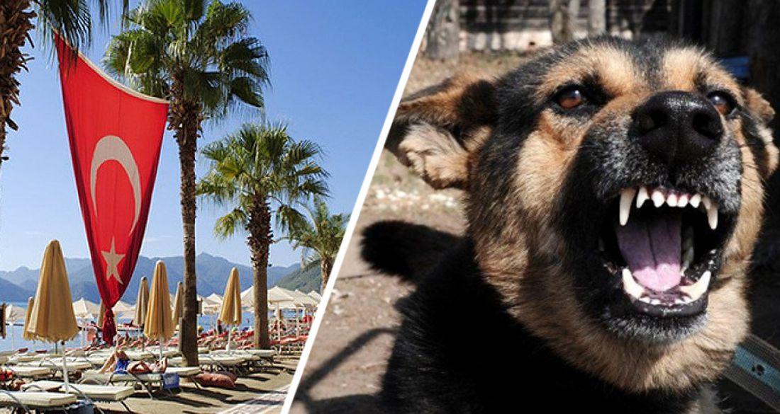 В Анталии сотрудницу турсектора загрызли бродячие собаки
