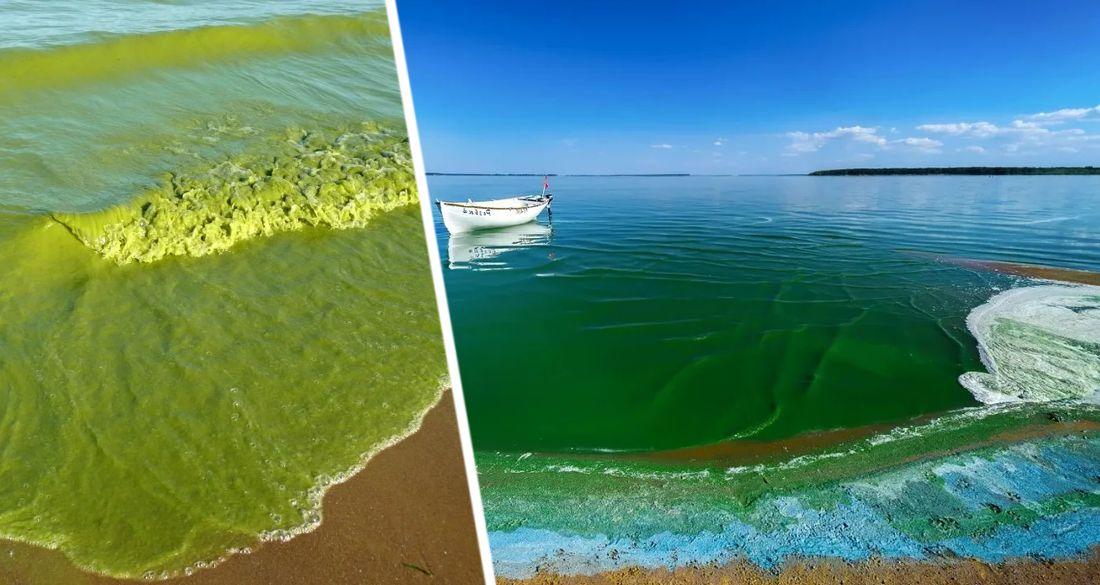 Новая напасть обрушилась на туризм Турции: опасные «морские сопли» заполонили море и угрожают здоровью туристов