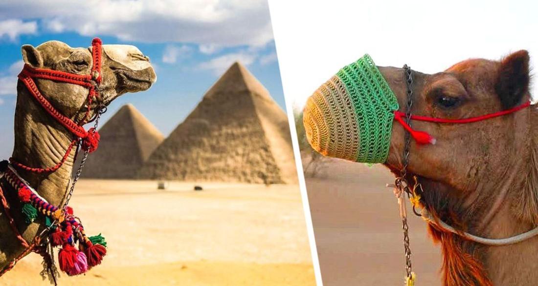 Спасите нас: в Египте жаждут старта прямых рейсов с российскими туристами