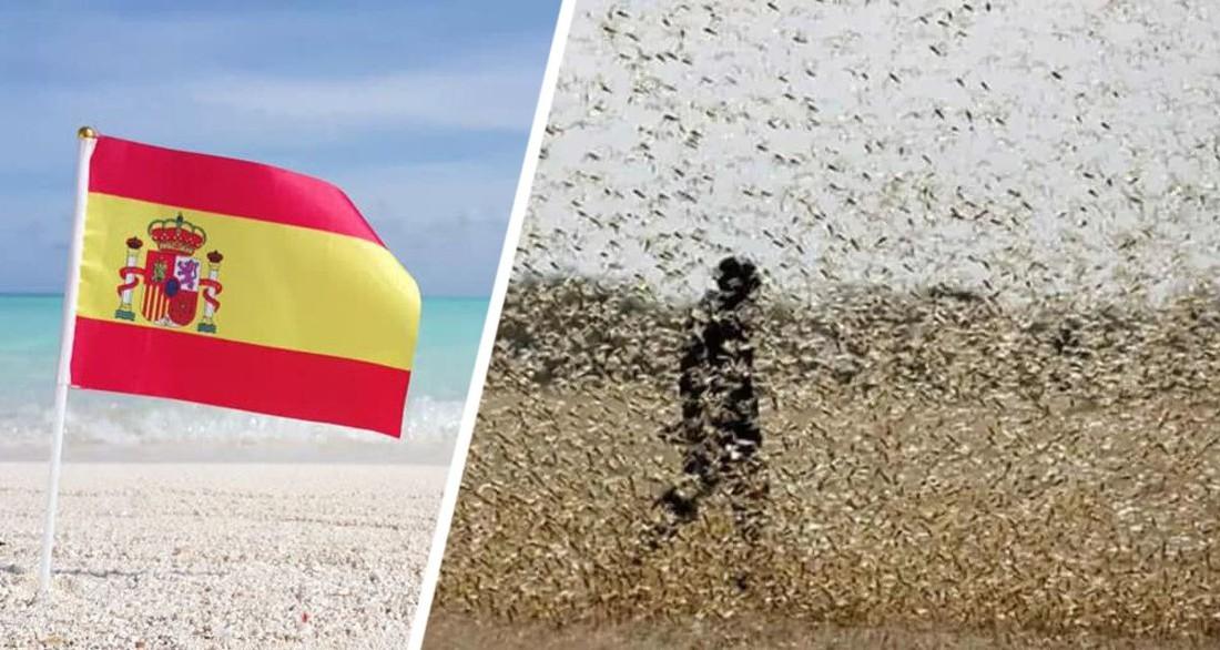Тревожный сигнал прозвучал для туризма Испании: на курортах началась атака чёрных мух, туристы разбегаются в панике